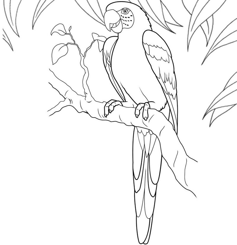 Macaw Bird San Diego Coloring Page