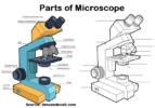 4 Best Microscope Drawing and Coloring Pages