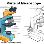 Parts of Microscope Drawing and Coloring Page for Introducing Microscope