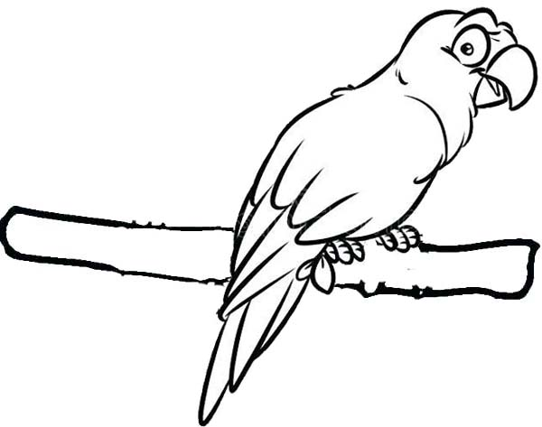 Scarlet Macaw Cartoon Drawing and Coloring Page