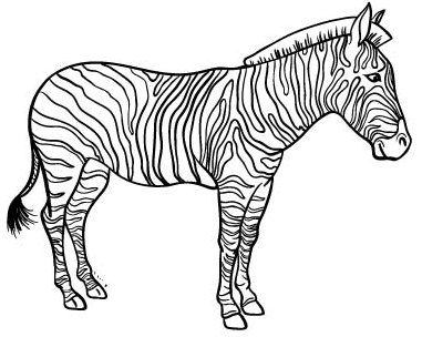 Top Zebra Coloring Page for Children