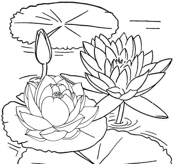 Wonderful Lotus Coloring Page for Girls