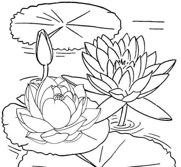 Wonderful Lotus Coloring Page for Girls