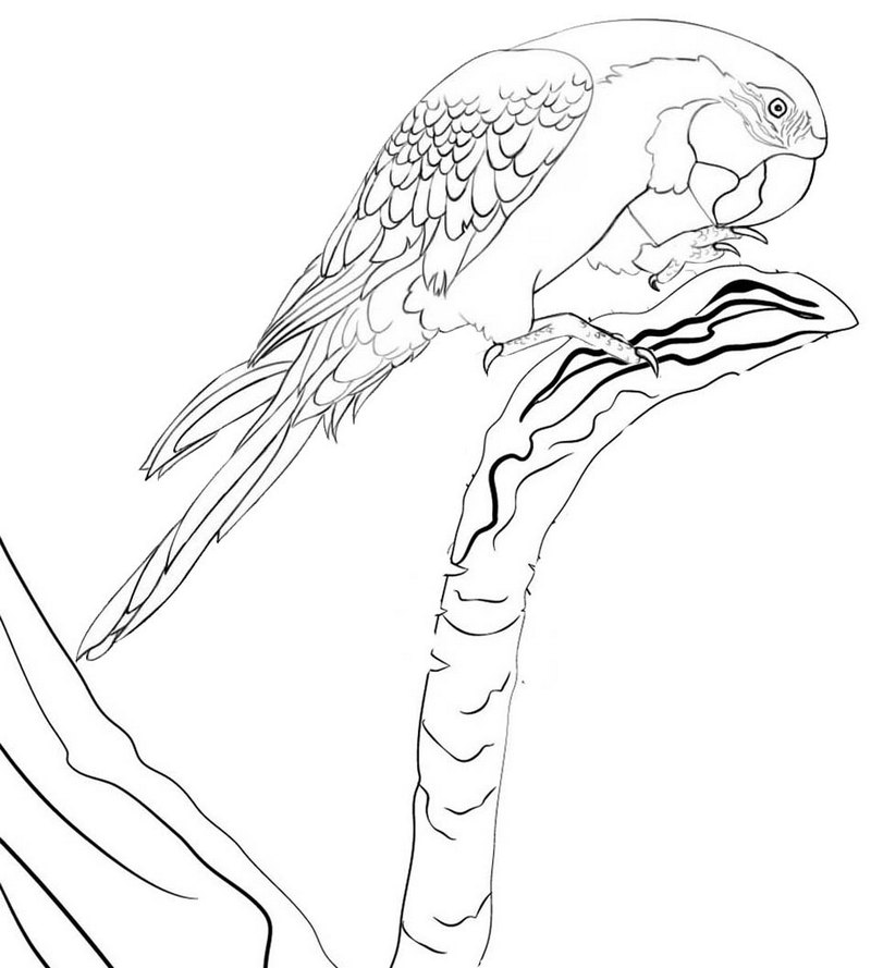 Wonderful Macaw Zoo Coloring Page