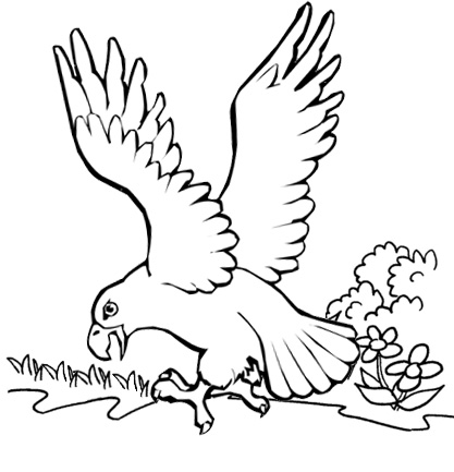 awesome eagle pouncing coloring page for kids