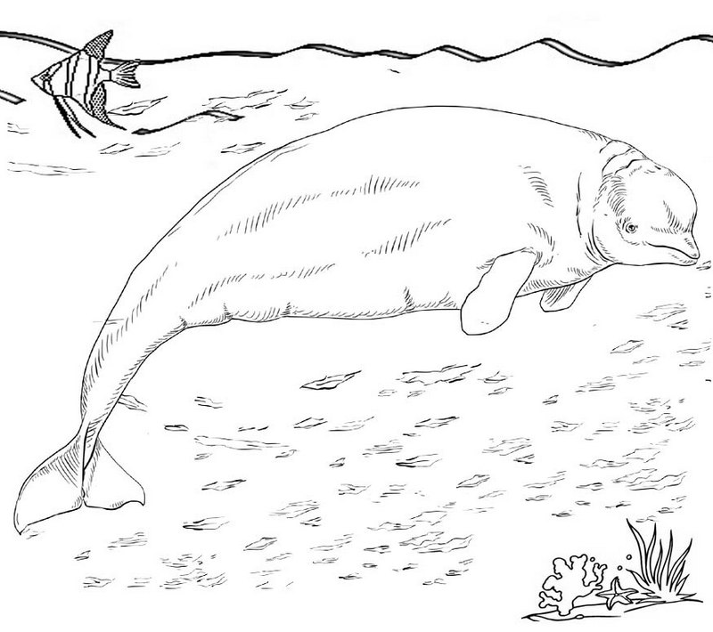 beluga whale under the sea coloring pages