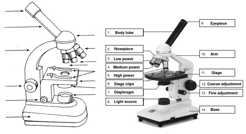 microscope parts introduction drawing for students