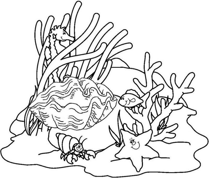 oyster coral reefs coloring page