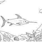 swordfish xiphias undersea coloring page