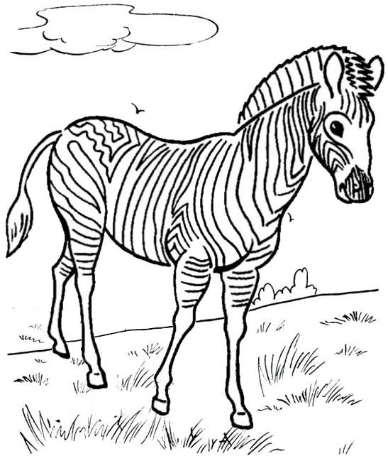 zebra in savanna coloring pages