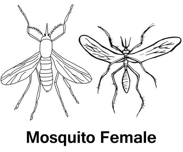 Female mosquito icon coloring and drawing page