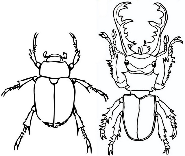 Goliath and Stag Beetle Coloring Page for Insect Fans