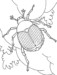 7 Amazing World of Beetle Insects with Wild Nature Coloring Pages