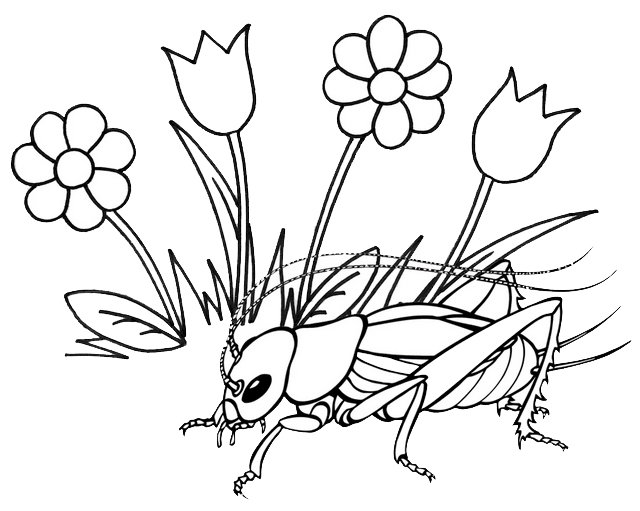 beautiiful cricket insect with grass flowers coloring page