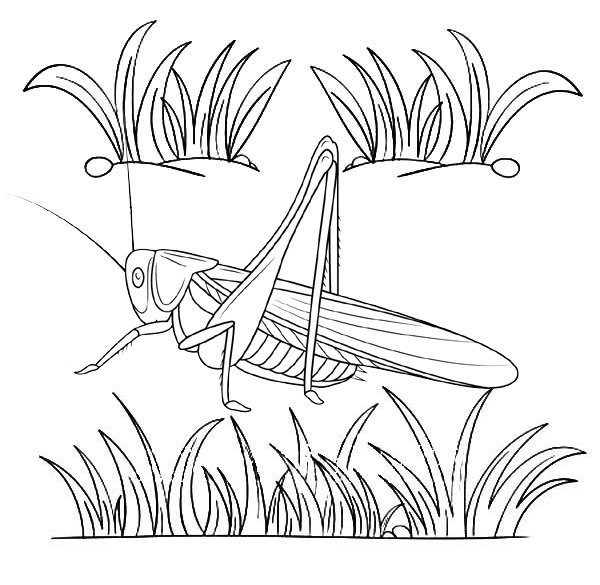 best realistic cricket coloring page for kid