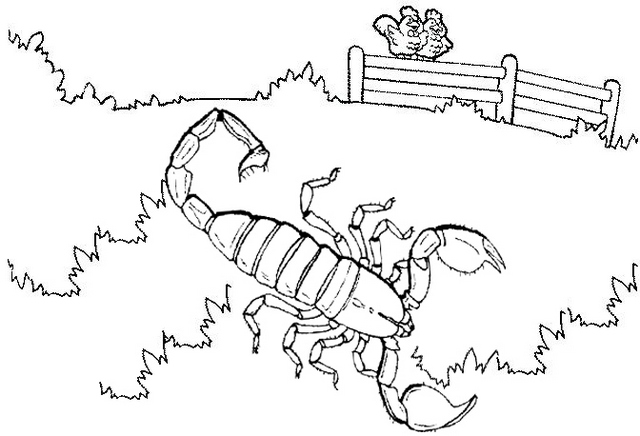 big king scorpion coloring page