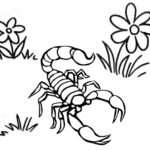 giant scorpion coloring page