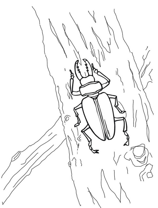 insect stag beetle coloring page for kids