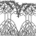 part of mangrove drawing picture