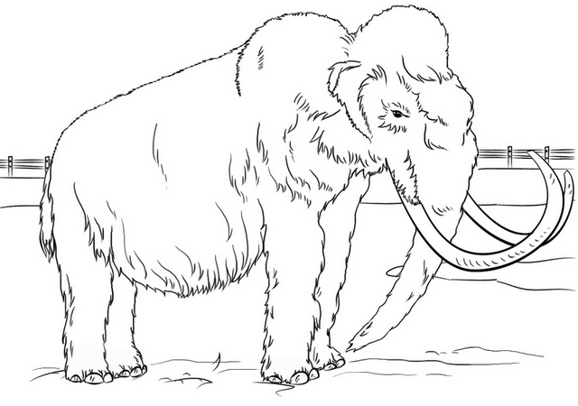 real wooly mammoth in zoo coloring page