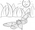 #6 Best Cicada Coloring Pages for Kids