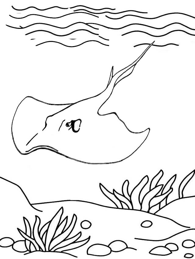 Epic Stingray sea animal ray Coloring Page for Kid