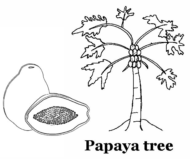 Papaya Fruit and Tree Coloring Page