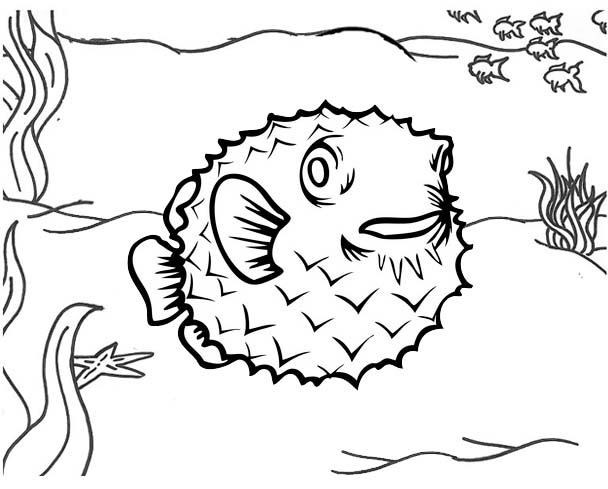 Poisonous Pufferfish Coloring Page for Kids