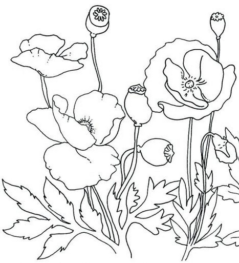 beautiful golden poppy flower coloring page