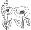 #7 Beautiful California Poppy Flower Coloring Pages