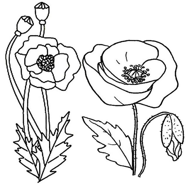 best poppy flower plant landscape coloring page
