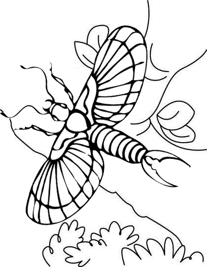 earwig flying coloring page