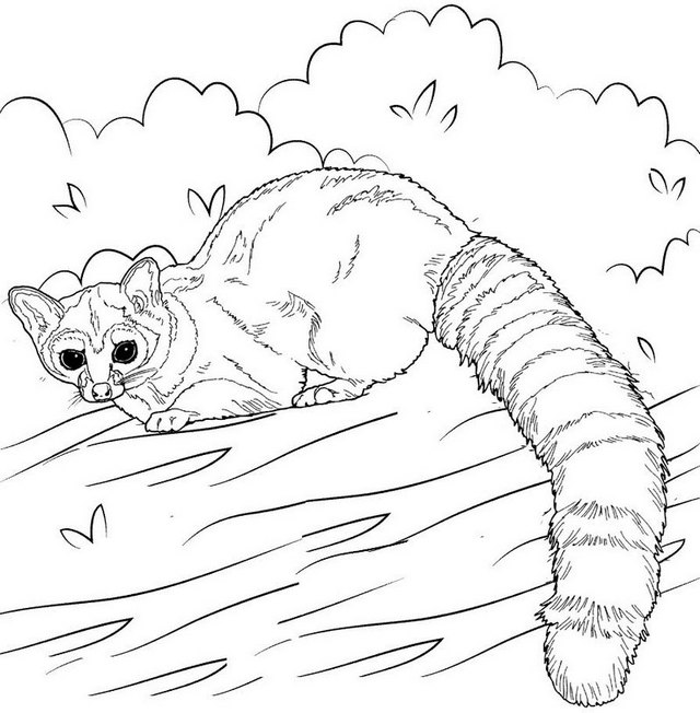 lemur in the zoo coloring page