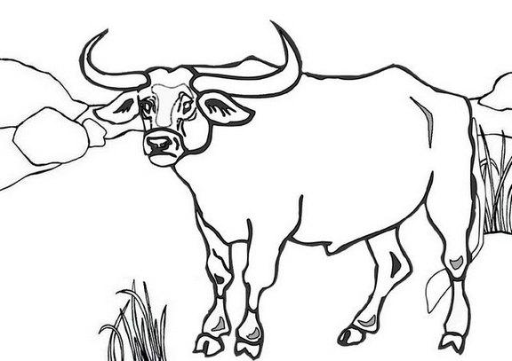 semi realistic bull coloring page