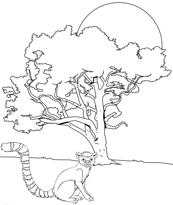 smart lemur coloring page