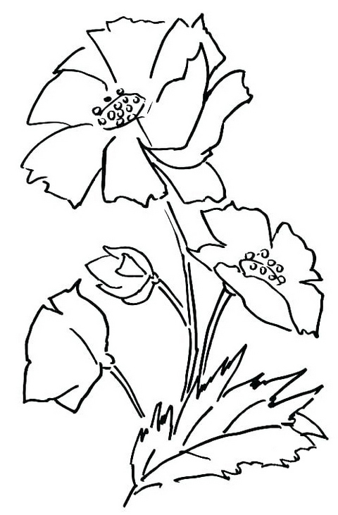 yellow single poppy flower coloring pages
