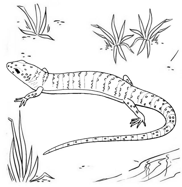 Gecko Screaming Coloring Page