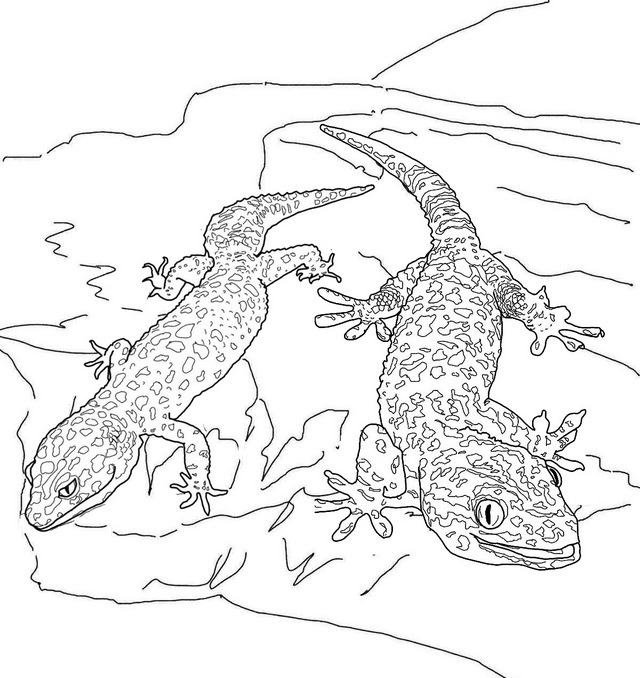 two geckos lizard coloring page