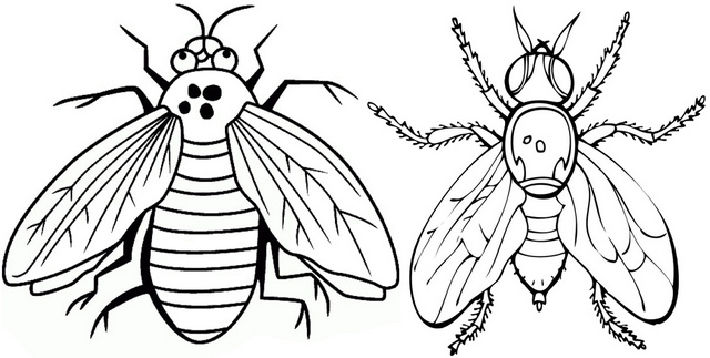 Blue and Black Flies Coloring Page