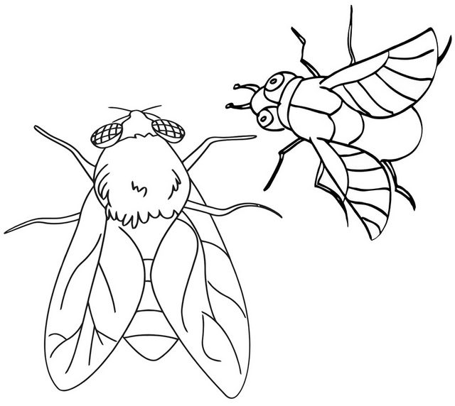 Flies Flying Coloring Page