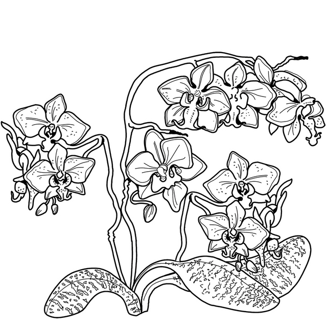 orchid florist coloring page