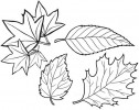 Leaves Coloring Pages to Create Botanical Art