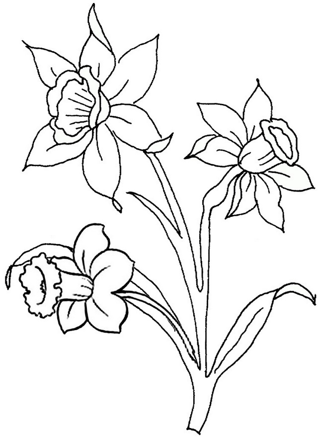 beautiful daffodils coloring page
