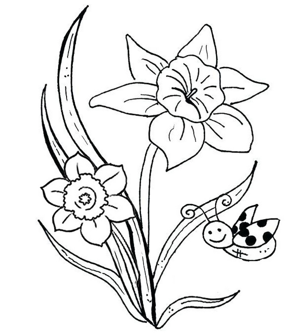 daffodil flower coloring page bee