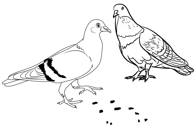 pigeon eating food on the ground coloring page