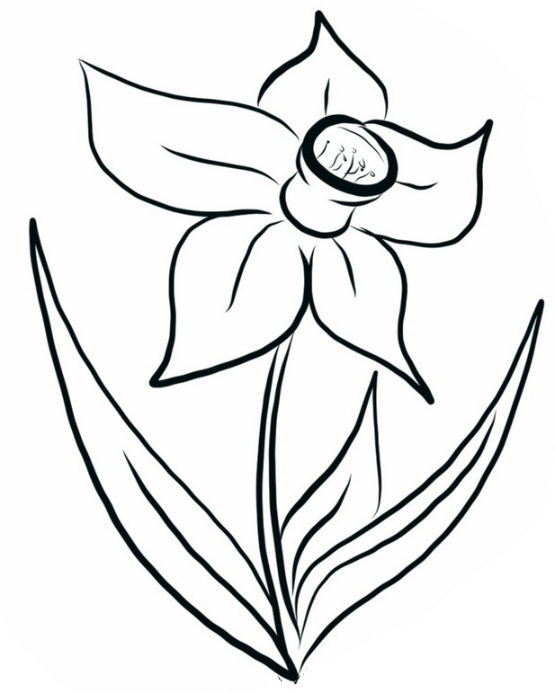 top daffodils coloring page