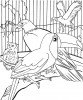 Seven Beautiful Toucan Coloring Pages: Mandala, Realistic and Cartoon