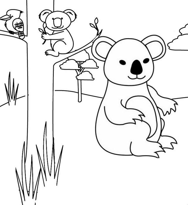 Australian Koala Bear Coloring Page