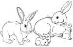 Real and Cartoon Rabbit Coloring Pages for Children