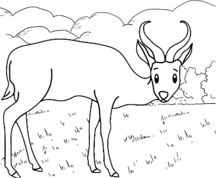 Best Antelope Coloring Page